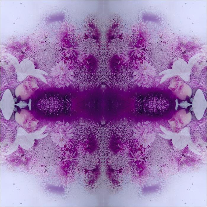fin tijuanaflower(s)